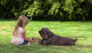 How to train a good dog, obey the owner with the basic steps
